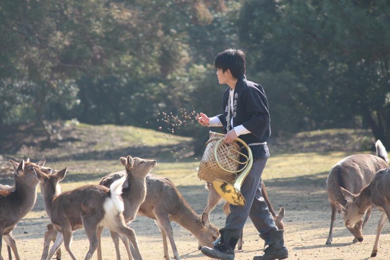鹿寄せではドングリを鹿に与えます。