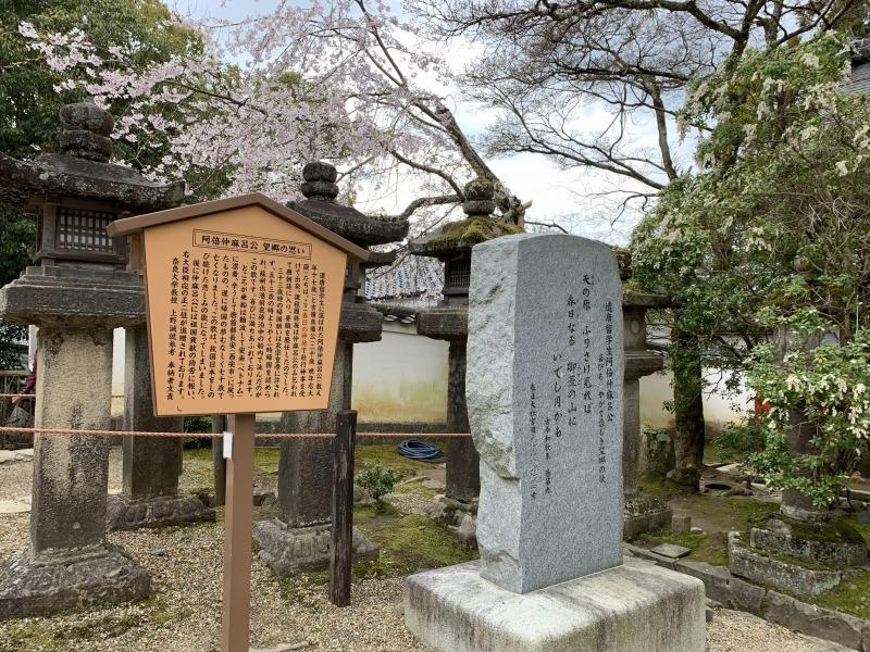 阿倍仲麻呂公の歌碑に咲く桜