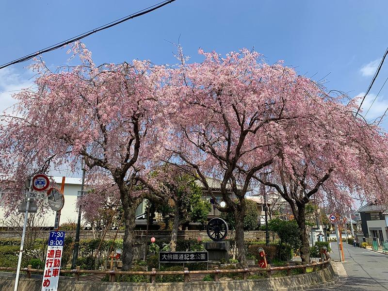 大仏鉄道記念公園のしだれ桜