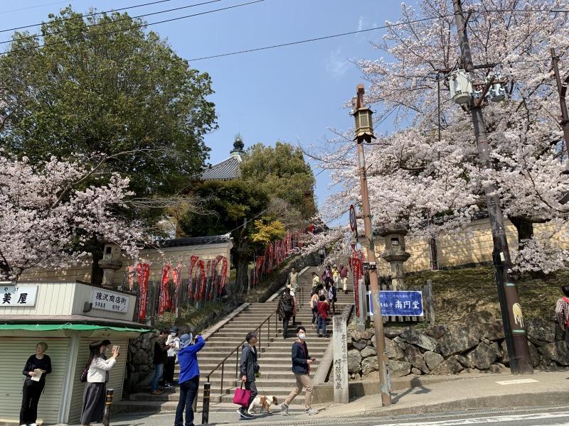 南円堂と桜