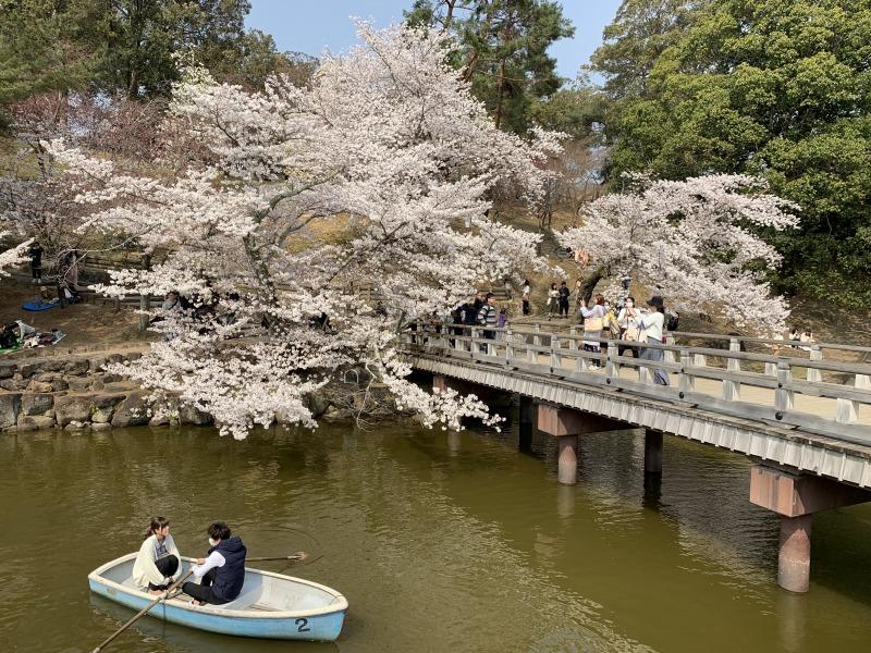 桜の下でボートデート