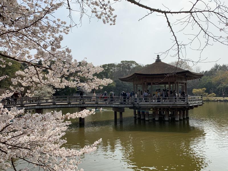 浮見堂と桜