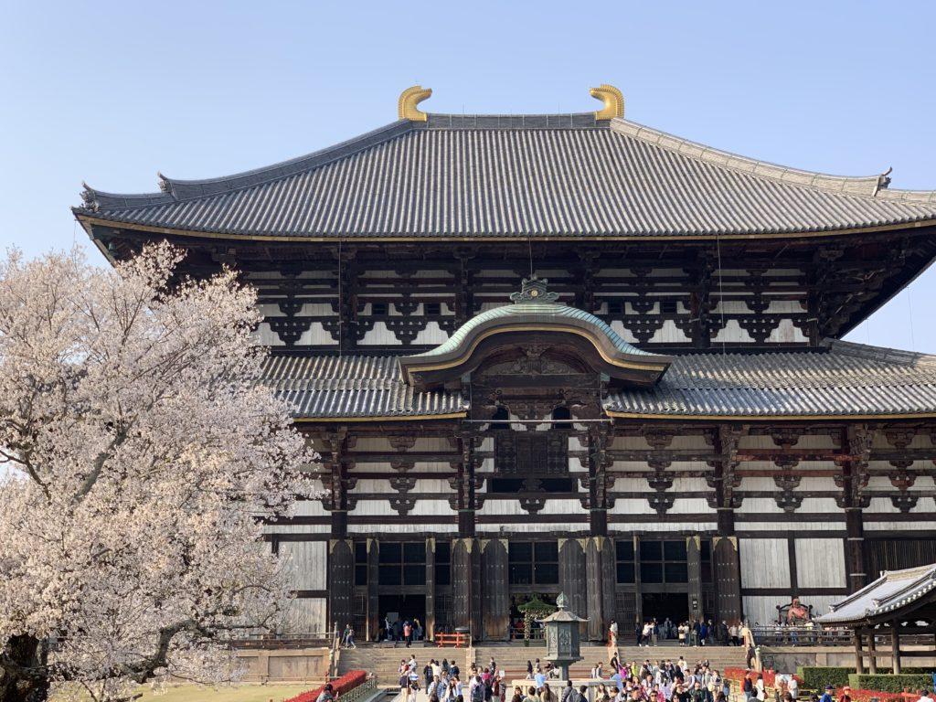 東大寺大仏殿の桜