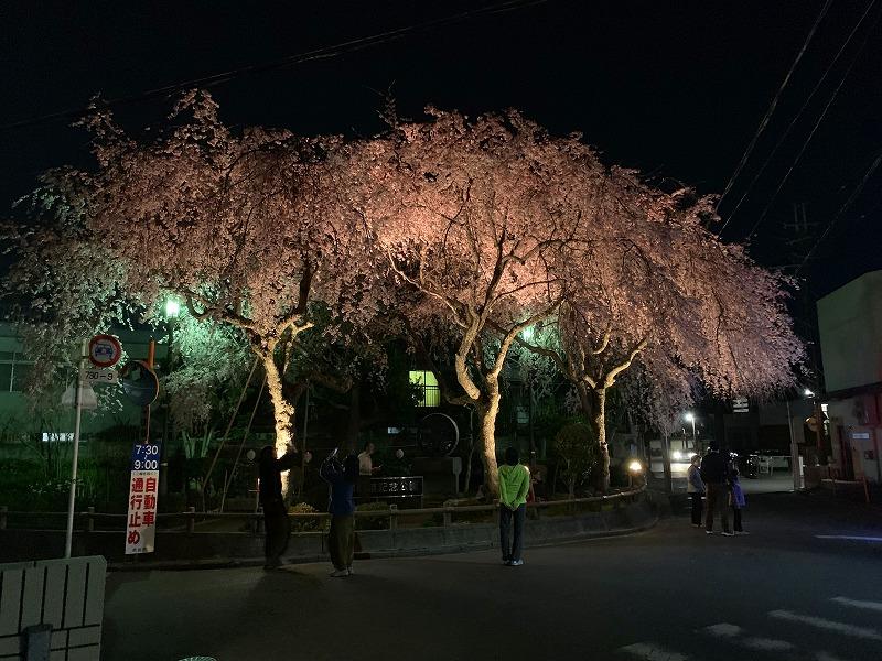 大仏鉄道記念公園の桜のライトアップ