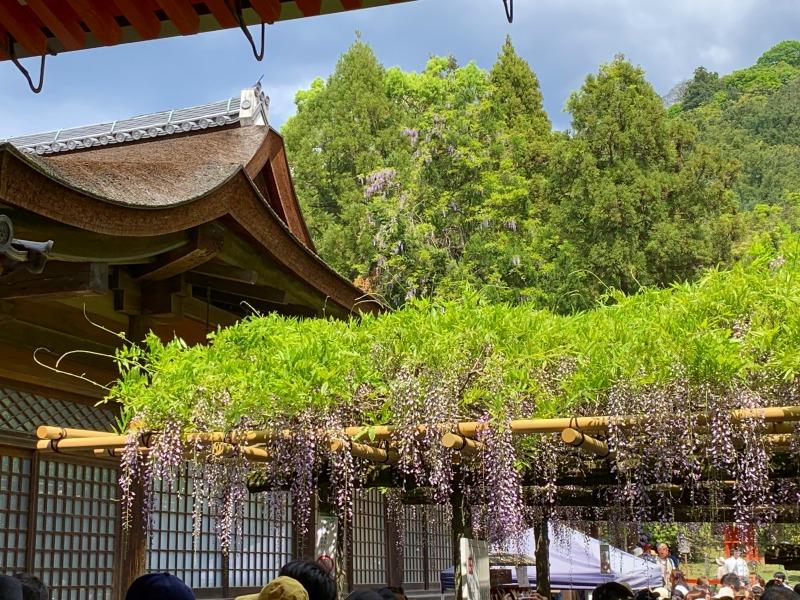 直会殿と砂ずりの藤