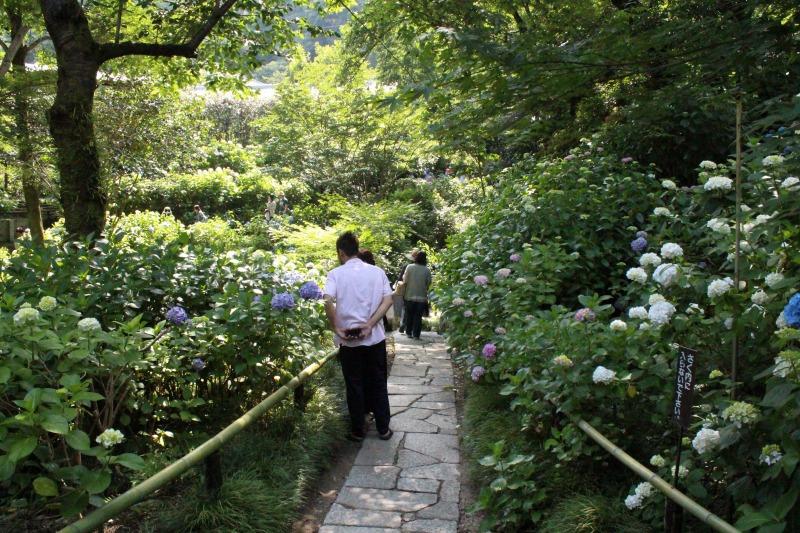 矢田寺のあじさい大庭園