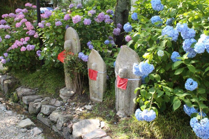矢田寺のお地蔵さまとあじさい